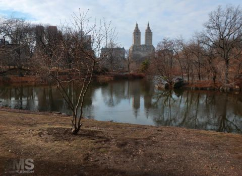 Central Park in February by steeber