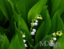 Spring Bells Ring Out The Lily-of-the-Valley by 33M