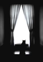 Solitary Cat by octokat