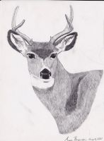 Mule Deer Drawing by Zoltack429