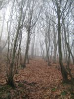 UNRESTRICTED - November '09 - Foggy Forest 10 by frozenstocks