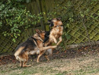 My pups playing in the garden by extremecapture