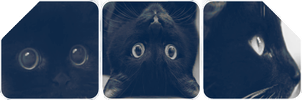 F2U Cat Divider 1 by TheAwesomeTrina