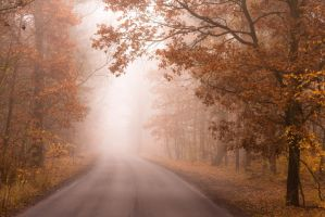 foggy autumn by Tanitha