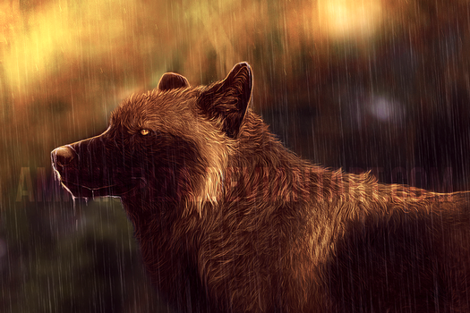 rain in the late afternoon by Amphispiza