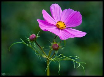 Blooming on a Grey Day by KeldBach