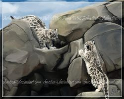 Snow Leopard Cubs at Play by Chaotica-I