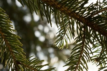 Pine Needles by Tregor