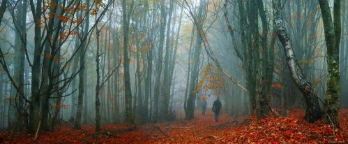 A Walk to Remember by borda