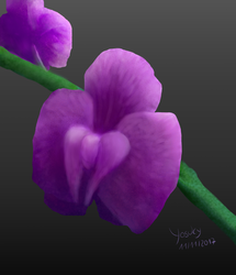 Orchidee by Yosuky