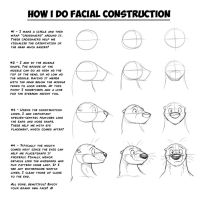 How I Do Facial Construction for Characters by Temiree