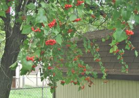 Hawthorn and Storage Sheds by vidthekid