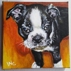Riley the Boston Terrier Puppy by beachrain