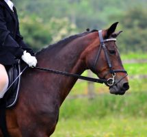 Dressage Stock 005 by HKW1994