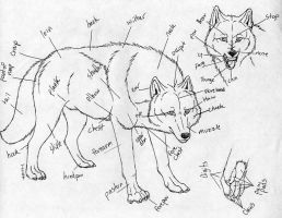 Wolf diagram by itsmar