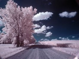 road home by foodshelf