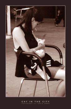 Cat in the City by eskie