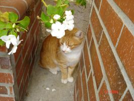 Oliver the Flowery Cat by Veggieman