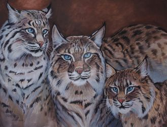 Turpentine Creek Bob Cats  by HouseofChabrier