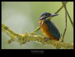 Fisher King II by ClaudeG