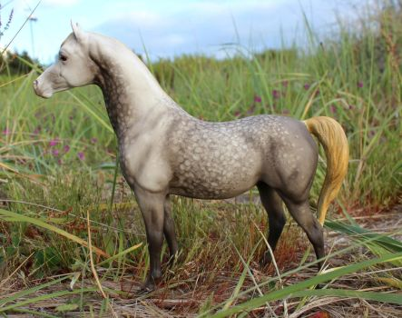 Letora - Breyer Custom Proud Arabian Mare by lupagreenwolf
