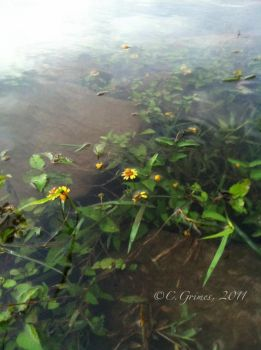 iPhone: Flowers in the Water by CapturedCosmicDebris