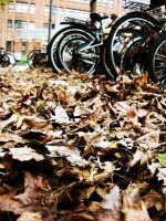 Dried Leaves by mnjul