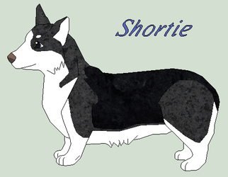 Shortie by Windhaven-Kennel