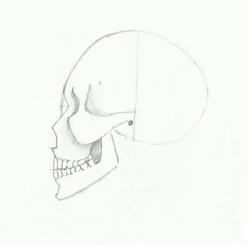 Skull Profile View by BlackStar2661