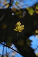 Leaf in Space by calger459