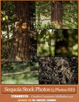 SEQUOIA Stock 5 Photos Sempervirens Coast redwood by MattiaMc