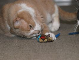 dexter loves catnip by nesslauncher1