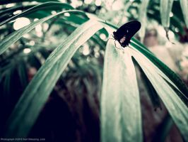 Tropical Swallowtail Shot Wide by KBeezie