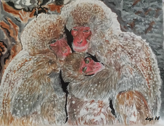 Japanese Macaque by dezi007