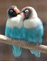 Lovebirds by SGeorgesPhotography