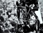Eventing -Pan by AndersStangl