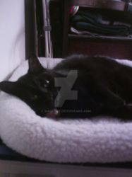 Mittens Oct 18 2013 002 by smcandy