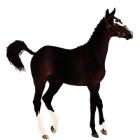 Lineage TB auction (blaklion) - Seal Bay Sabino by Lone-Onyx-Stardust