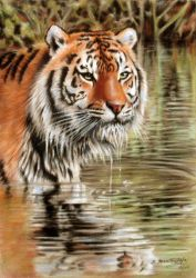 Tiger In Water by petpaintings