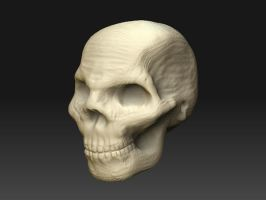 Modelling a bust - Skull by Elhith