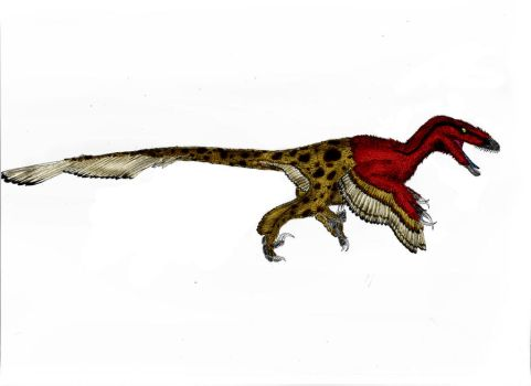 Utahraptor ostrommaysorum by Durbed