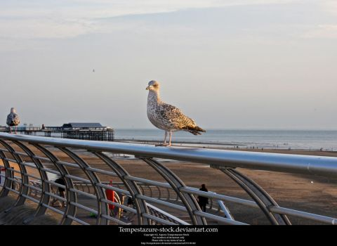 Seagull 2-Stock by tempestazure-Stock