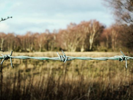 Barbed Wire by Daydreamer483