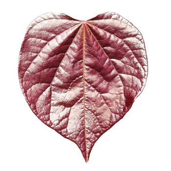 Red Leaf PNG by Bunny-with-Camera