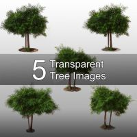 5 Transparent Tree Images by ParadisiacPicture