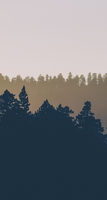 Silhouettes of the forest - custom box background by Martith