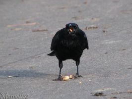 Christmas peanuts for crows by Momotte2