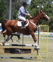 STOCK Showjumping 402 by aussiegal7