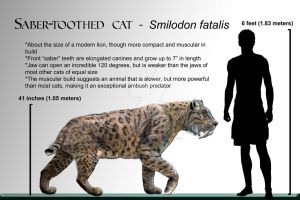 Wiki Smilodon by Dantheman9758