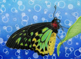 Butterfly by agnes21